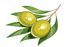 Pair of green olive vector illustration eps10 Royalty Free Stock Photos
