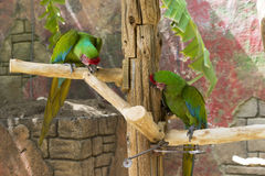 A pair of green parrots. Sitting on a branch stock photo