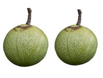 A pair of green tropical fruit isolatd on white backgrounds royalty free illustration