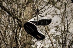 Pair of Grey Low-top Sneakers Hanged on Tree Stock Image