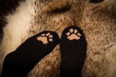 Pair of a hand knitted woolen socks with a cat paw pattern. On fur background stock photography