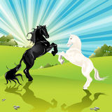 Pair of the horses. Illustration, black horse and blanching horse on background of the landscape Stock Image
