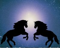 A pair of horses fallen in love Stock Photography