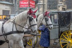 A pair of horses pulling a carriage royalty free stock photo