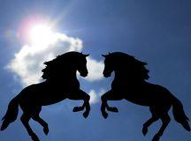 A pair of horses Stock Images
