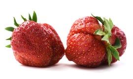 Pair of imperfect organic fresh ripe heirloom strawberries isolated. Pair of imperfect organic fresh ripe heirloom strawberries closeup stock images