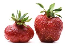 Pair of imperfect organic heirloom strawberries. Closeup royalty free stock image