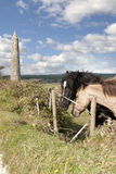 Pair of Irish horses and ancient round tower royalty free stock photos