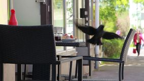 Pair of jackdaws lunch in the cafe Royalty Free Stock Image