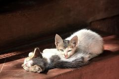 A pair of kittens basking in morning sun royalty free stock images