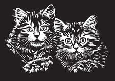 Two kittens Stock Images
