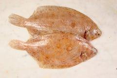 Pair of lemon sole Stock Image