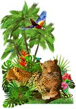 A pair of leopards in the rainforest. royalty free stock image