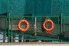 Pair lifebuoys. On green fence around the pool Royalty Free Stock Photos