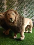 Lion. Pair of lions Stock Photography