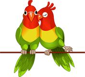 Pair of lovebirds. Agapornis-fischeri on white Stock Photography