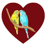 Pair of lovebirds agapornis-fischeri Royalty Free Stock Photography
