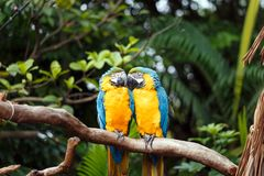 A pair of lovebirds royalty free stock photos