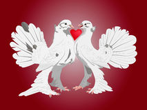 Pair of lovers of pigeons. Pattern. Pair of lovers thoroughbred white doves with a heart between them on a red background Royalty Free Stock Images