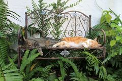 Two domestic cats sleeping on benche. Pair of male tabbies sleeping together side by side on in the garden stock photos