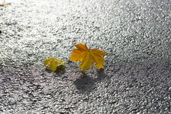 Pair of Maple Leaves on Tarmac Stock Images