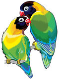Pair of masked lovebirds Stock Photography