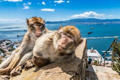 A pair of monkeys preening.