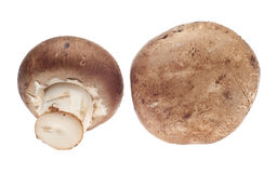 Pair of Mushrooms Royalty Free Stock Photography