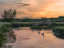 Pair of Mute Swans with Cygnets by a bridge at Sunset Stock Images