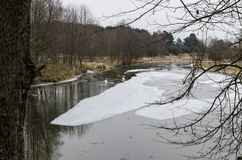 Swans in a winter landscape Royalty Free Stock Image