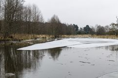 Swans in a winter landscape Royalty Free Stock Photo