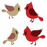 Pair of Northern Cardinals Stock Photography