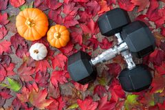 Free Pair Of Crossed Dumbbells On A Rustic Wood Background Covered In Fall Color Of Red, Green, Yellow, And Orange Maple Leaves, With C Stock Photography - 159647442