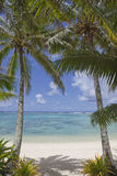 Pair Of Palm Trees On Tropical Beach Royalty Free Stock Image