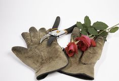 Old gloves, clippers and a red rose on a white background. A pair of old dirty gloves, a pruning tool and a red rose on white Royalty Free Stock Photo