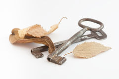 Pair of old keys and dry leaves Stock Photos