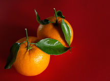 Pair of oranges with leaves royalty free stock photography