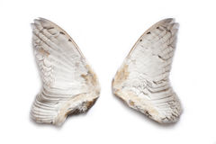 Pair of owl wings Royalty Free Stock Photos