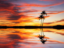 A pair of palm trees on the lake Royalty Free Stock Photo