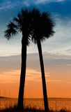 Pair of Palm Trees in Panama City, Florida Stock Photos