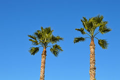 A Pair Of Palm Trees - Blue Sky Tropical Background Royalty Free Stock Photo