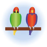 Pair of parrots Stock Photography