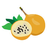 Pair of passion fruits. Isolated pair of passion fruits on a white background, Vector illustration Royalty Free Stock Image