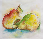 Pair of pears watercolor. Pair of paers brisk vivid watercolor Royalty Free Stock Photo