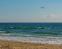 Pair of Pelicans Soaring over a Florida Beach. Blue background scene of two Florida brown pelicans flying together over the Atlantic ocean off a Florida beach stock photo