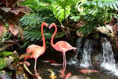 A pair of pink flamingos Stock Image