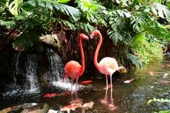 A pair of pink flamingos Royalty Free Stock Image