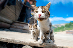 A pair of pitiable homeless cats Royalty Free Stock Photo