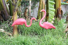 Pair of plastic pink flamingoes. Pair of retro kitsch plastic pink featherstone flamingoes in tropical grassy garden Royalty Free Stock Photography