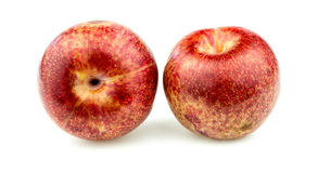 Pair of pluot apricot plums Royalty Free Stock Images